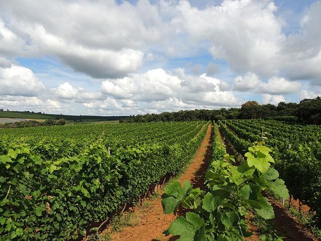 Tecnologia no campo e produtores antenados